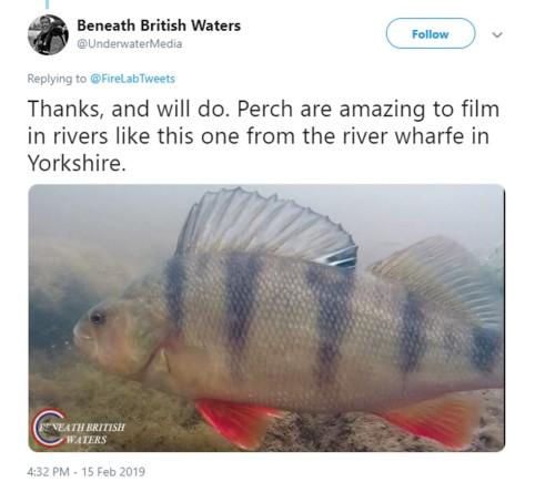 perch_guess